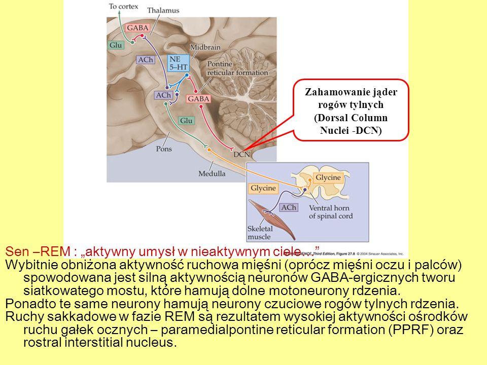 Zahamowanie jąder rogów tylnych (Dorsal Column Nuclei -DCN)