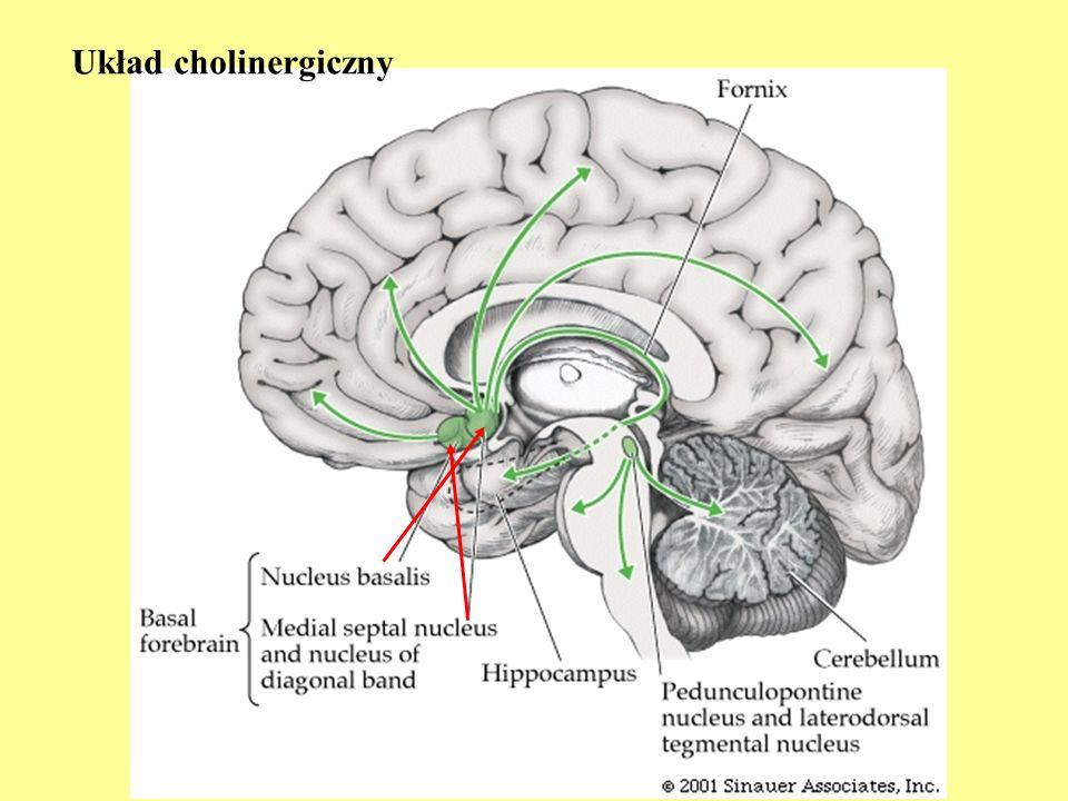 Układ cholinergiczny