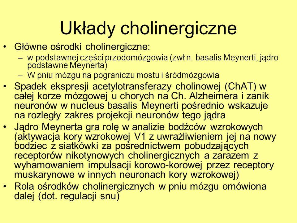 Układy cholinergiczne