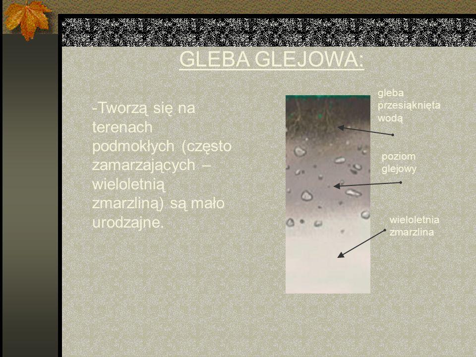GLEBA GLEJOWA: gleba przesiąknięta wodą. -Tworzą się na terenach podmokłych (często zamarzających – wieloletnią zmarzliną) są mało urodzajne.