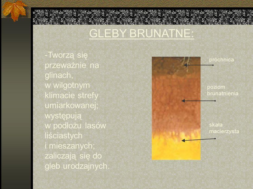 GLEBY BRUNATNE: