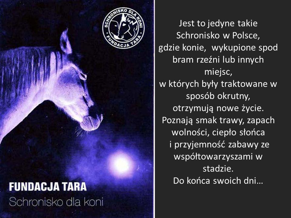 Jest to jedyne takie Schronisko w Polsce, gdzie konie, wykupione spod bram rzeźni lub innych miejsc, w których były traktowane w sposób okrutny, otrzymują nowe życie.