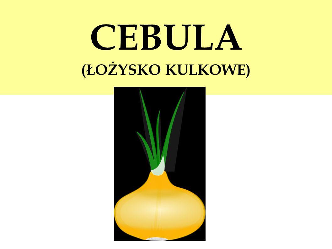 CEBULA (ŁOŻYSKO KULKOWE)