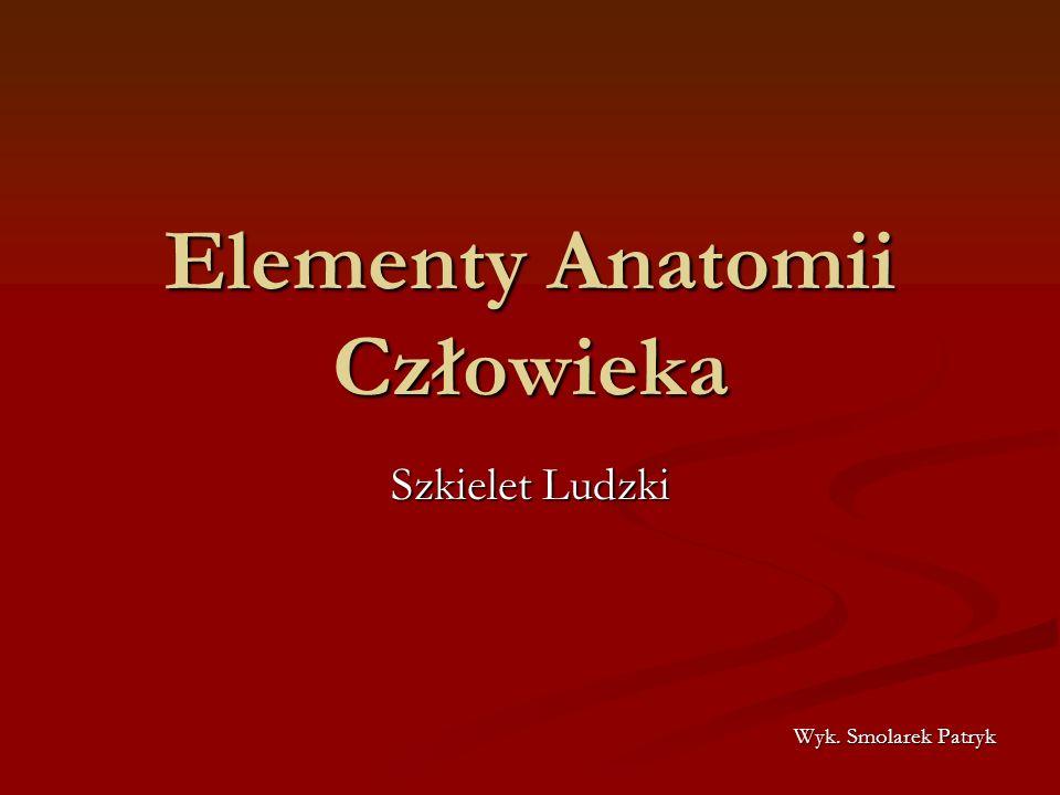 Elementy Anatomii Człowieka
