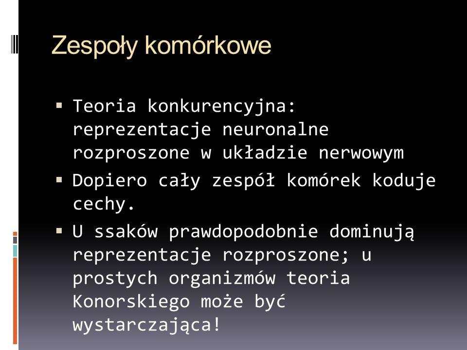 Zespoły komórkowe Teoria konkurencyjna: reprezentacje neuronalne rozproszone w układzie nerwowym.