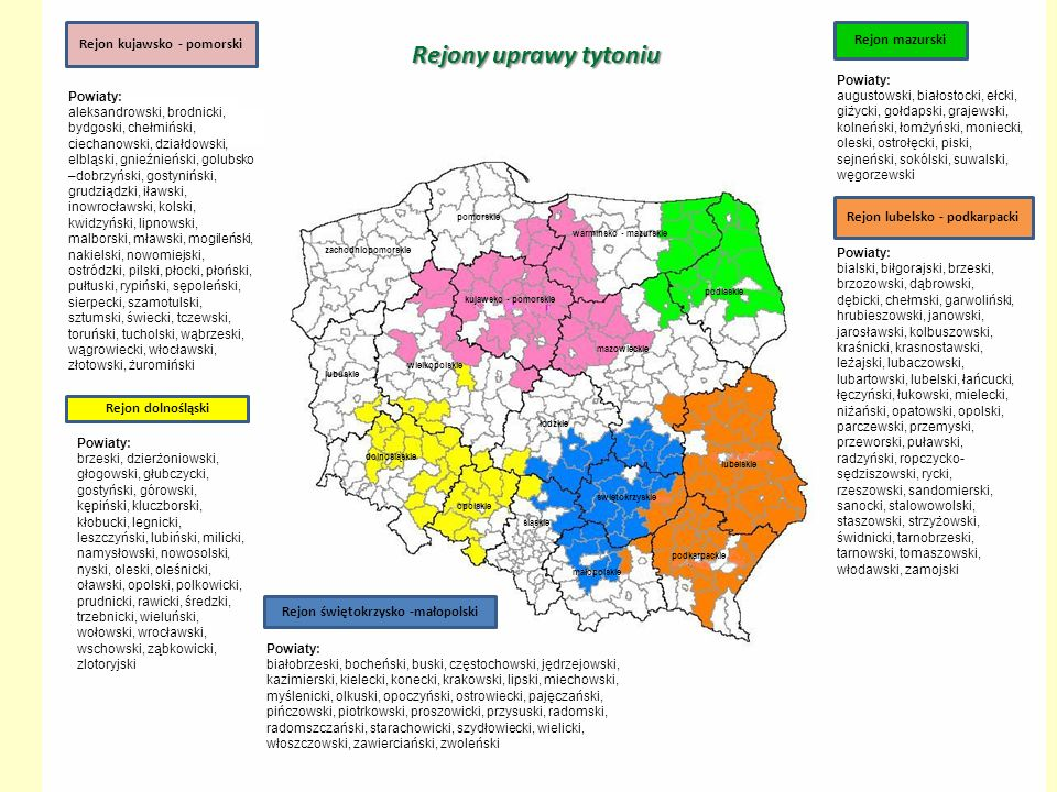 Rejony uprawy tytoniu Rejon kujawsko - pomorski Rejon mazurski