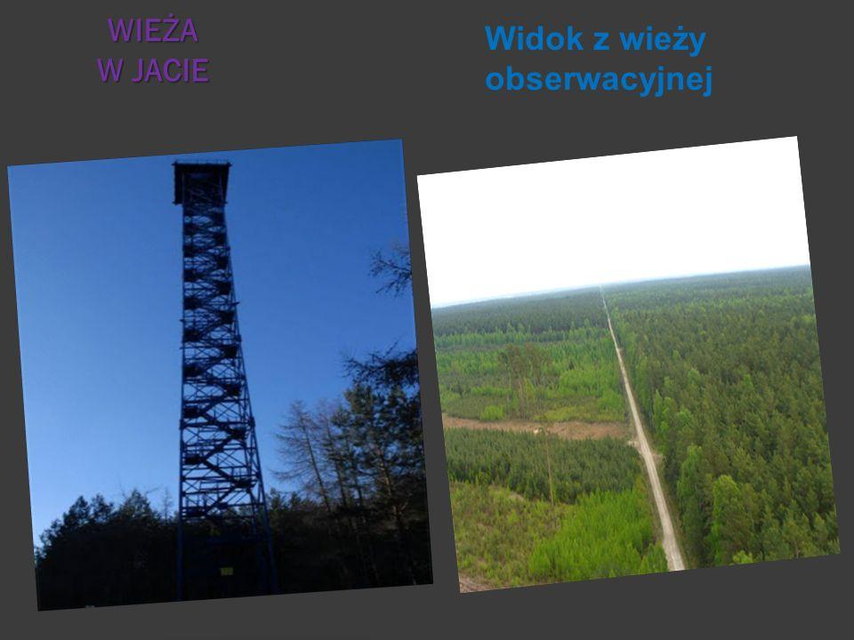 Widok z wieży obserwacyjnej