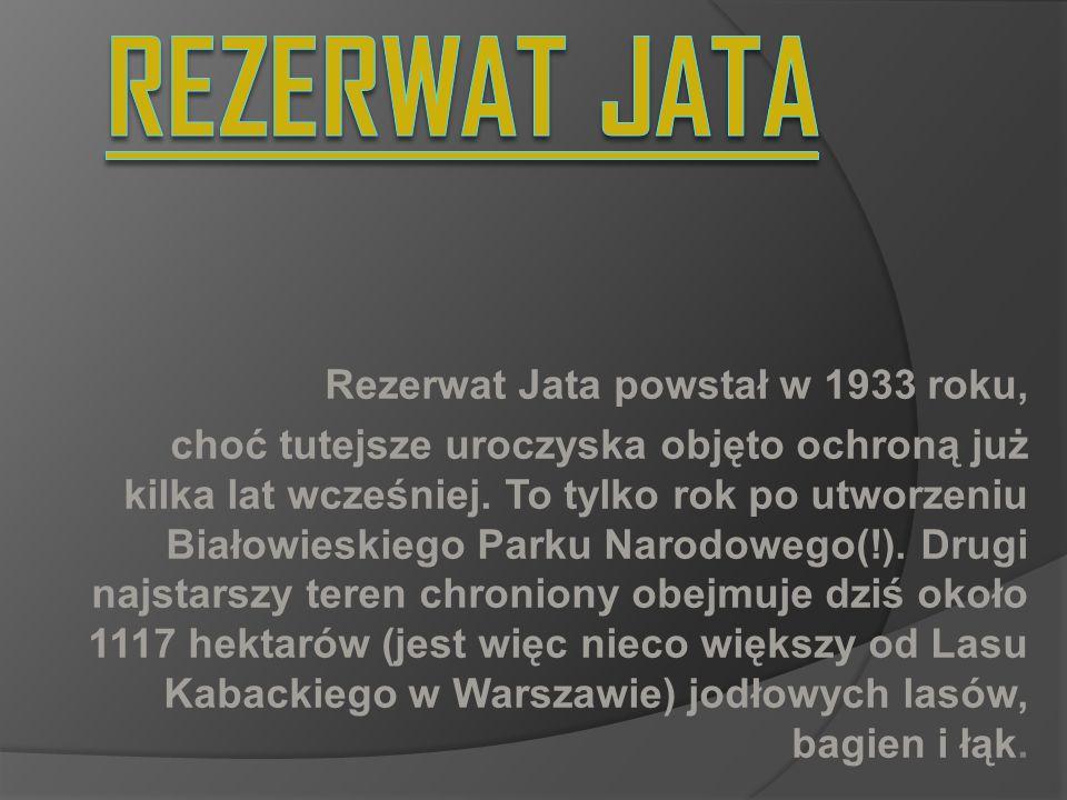 REZERWAT JATA Rezerwat Jata powstał w 1933 roku,