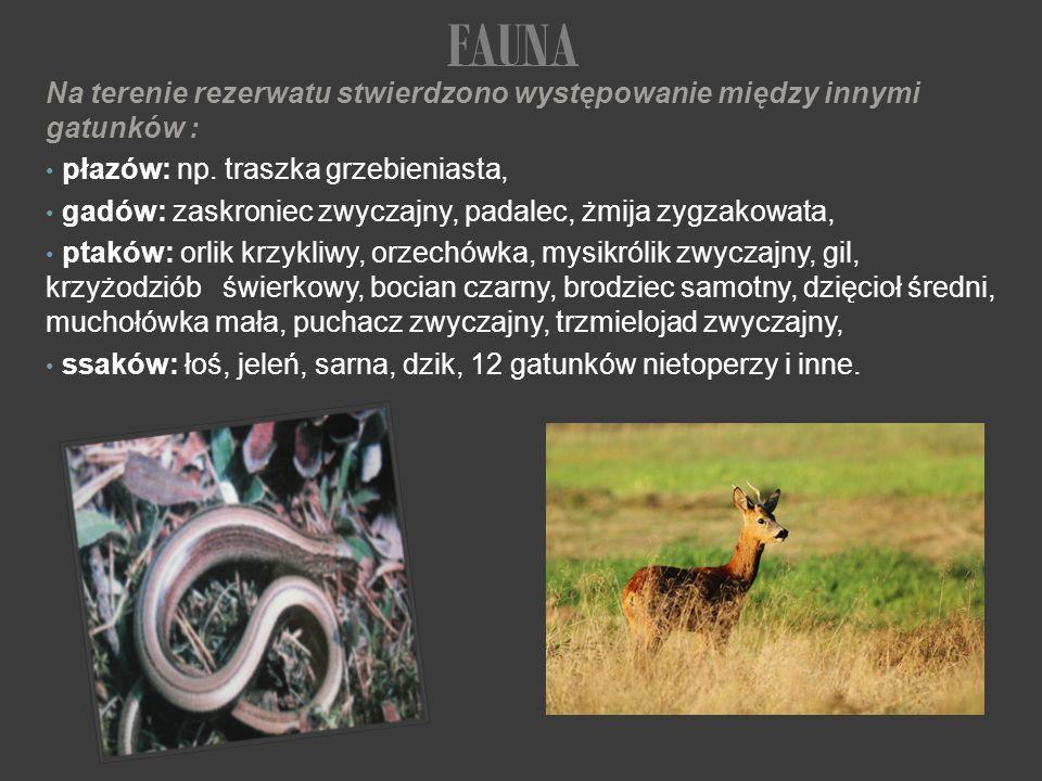FAUNA Na terenie rezerwatu stwierdzono występowanie między innymi gatunków : płazów: np. traszka grzebieniasta,