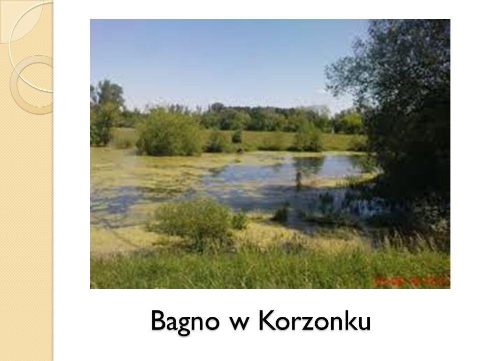 Bagno w Korzonku