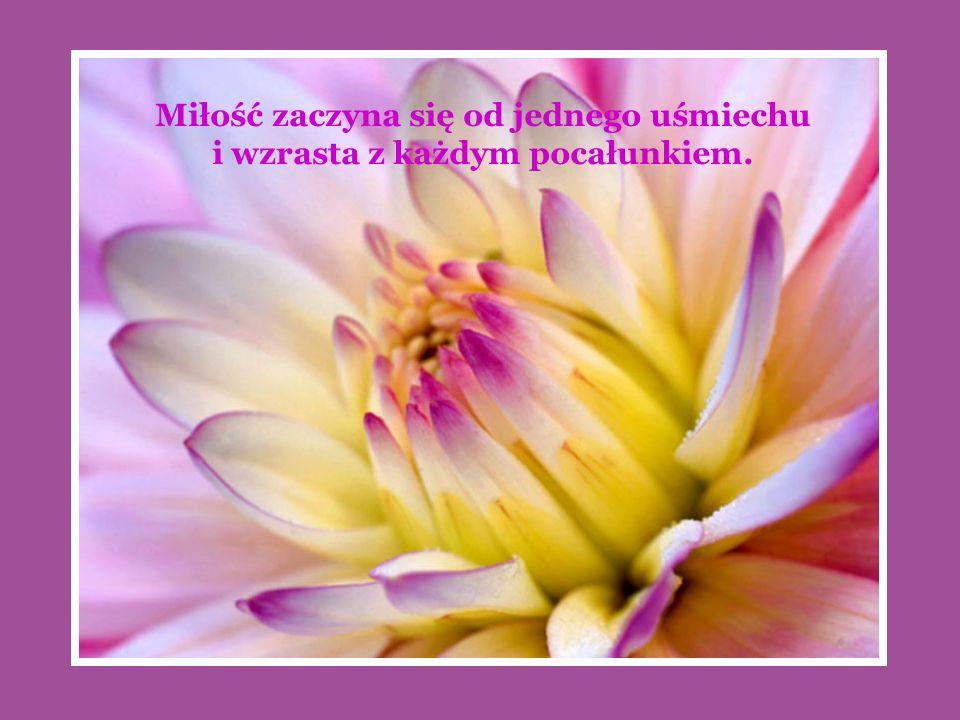 Miłość zaczyna się od jednego uśmiechu i wzrasta z każdym pocałunkiem.