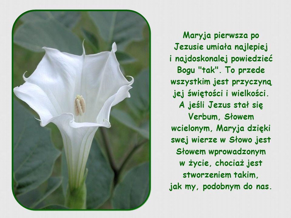 Maryja pierwsza po Jezusie umiała najlepiej i najdoskonalej powiedzieć Bogu tak .