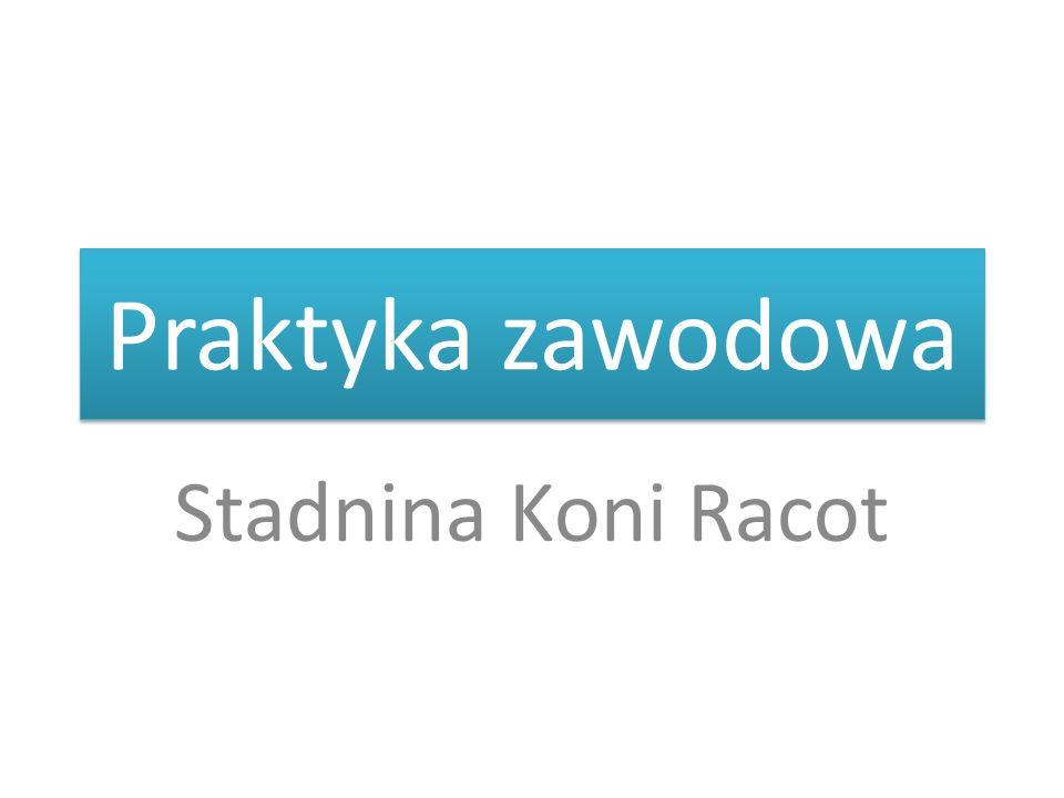 Praktyka zawodowa Stadnina Koni Racot