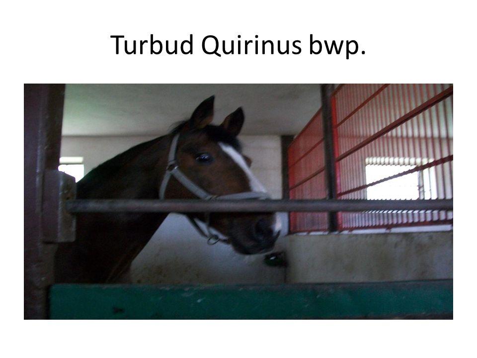 Turbud Quirinus bwp.