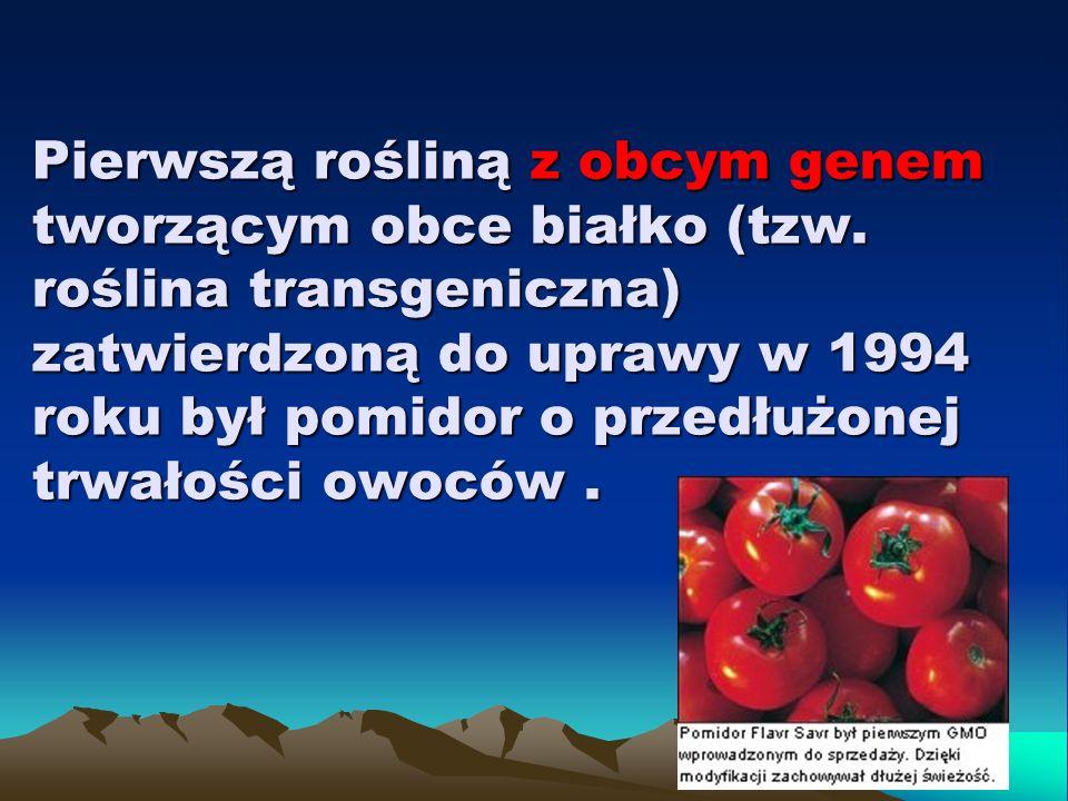 Pierwszą rośliną z obcym genem tworzącym obce białko (tzw
