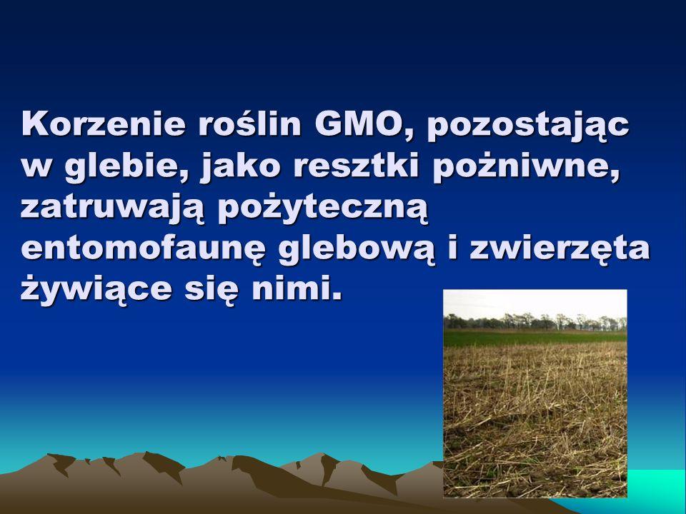 Korzenie roślin GMO, pozostając w glebie, jako resztki pożniwne, zatruwają pożyteczną entomofaunę glebową i zwierzęta żywiące się nimi.