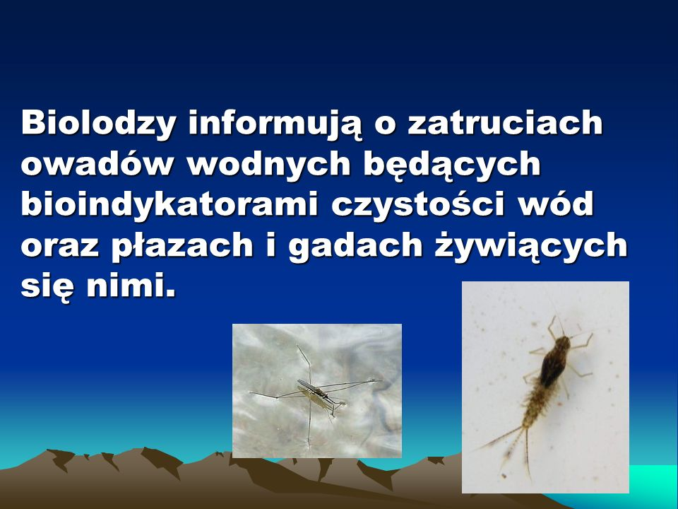 Biolodzy informują o zatruciach owadów wodnych będących bioindykatorami czystości wód oraz płazach i gadach żywiących się nimi.
