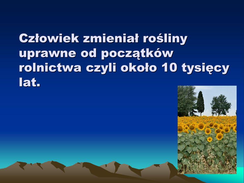 Człowiek zmieniał rośliny uprawne od początków rolnictwa czyli około 10 tysięcy lat.