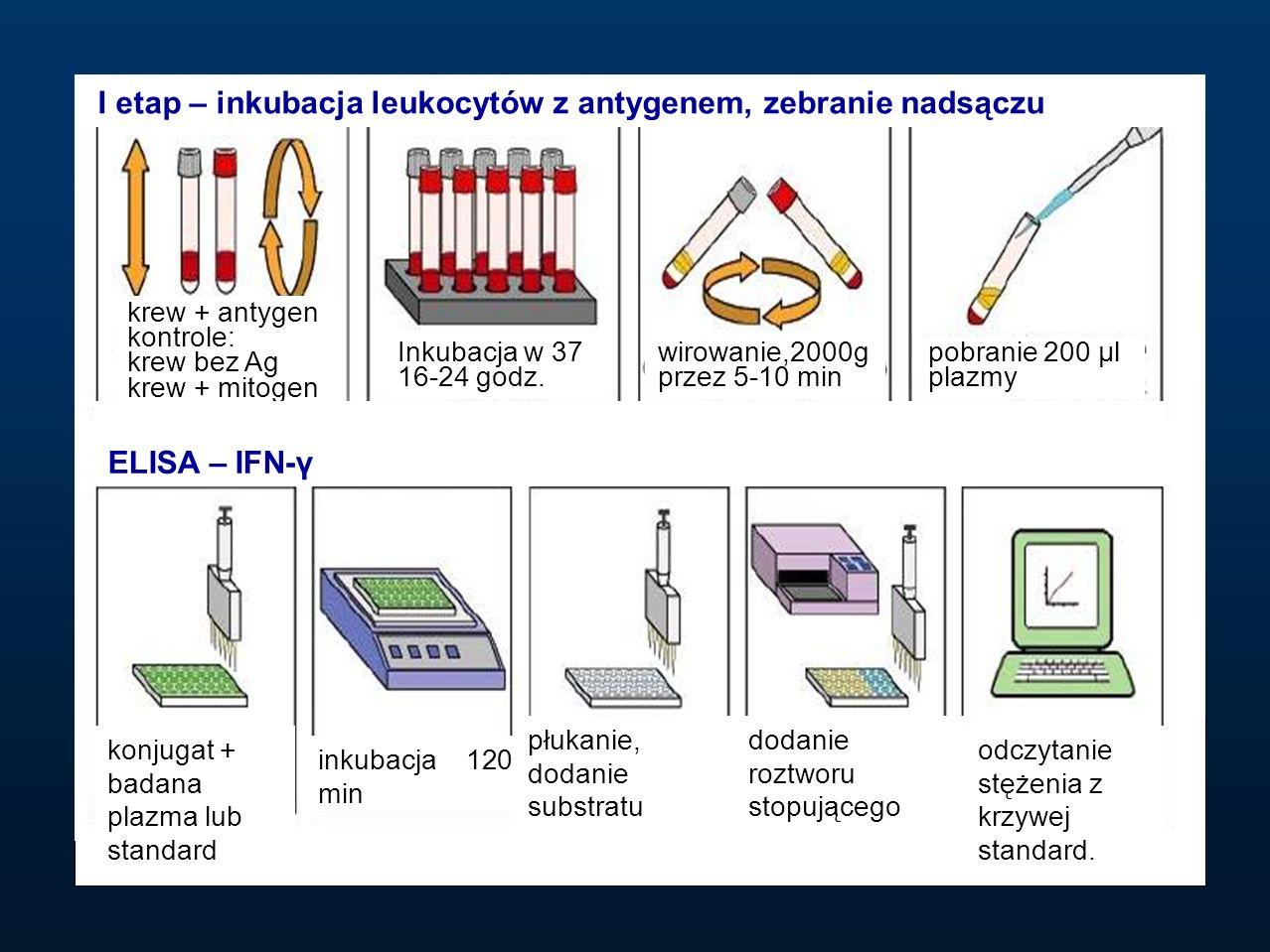 I etap – inkubacja leukocytów z antygenem, zebranie nadsączu