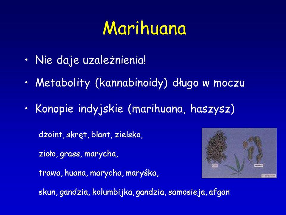 Marihuana Nie daje uzależnienia!