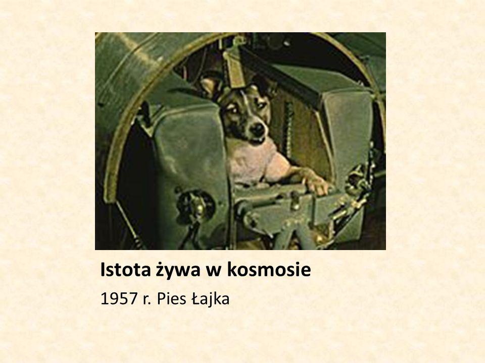 Istota żywa w kosmosie 1957 r. Pies Łajka