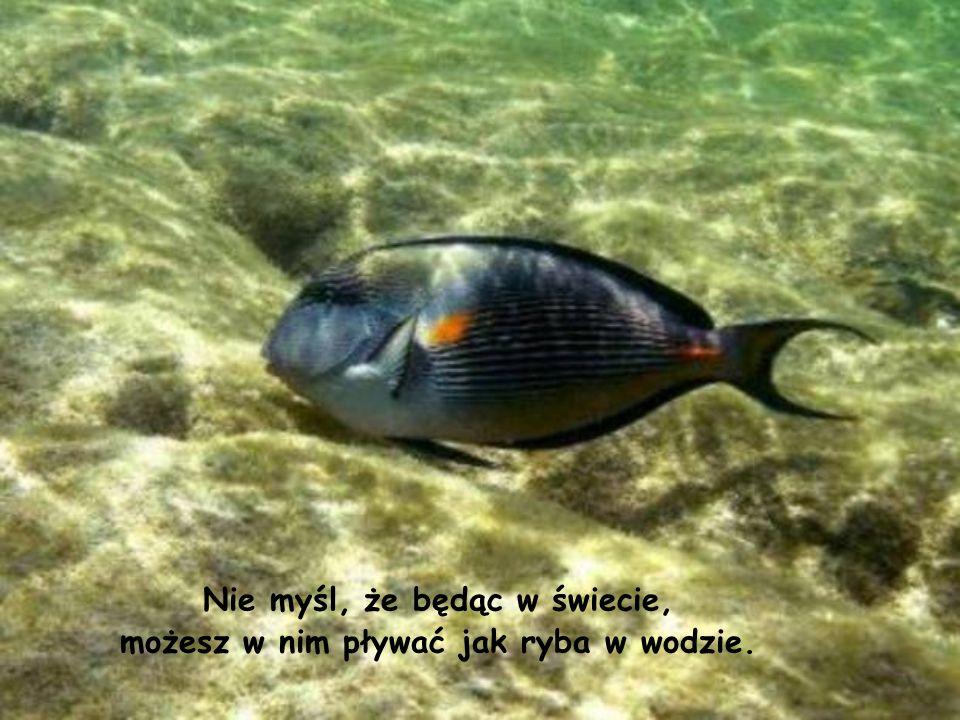 Nie myśl, że będąc w świecie, możesz w nim pływać jak ryba w wodzie.