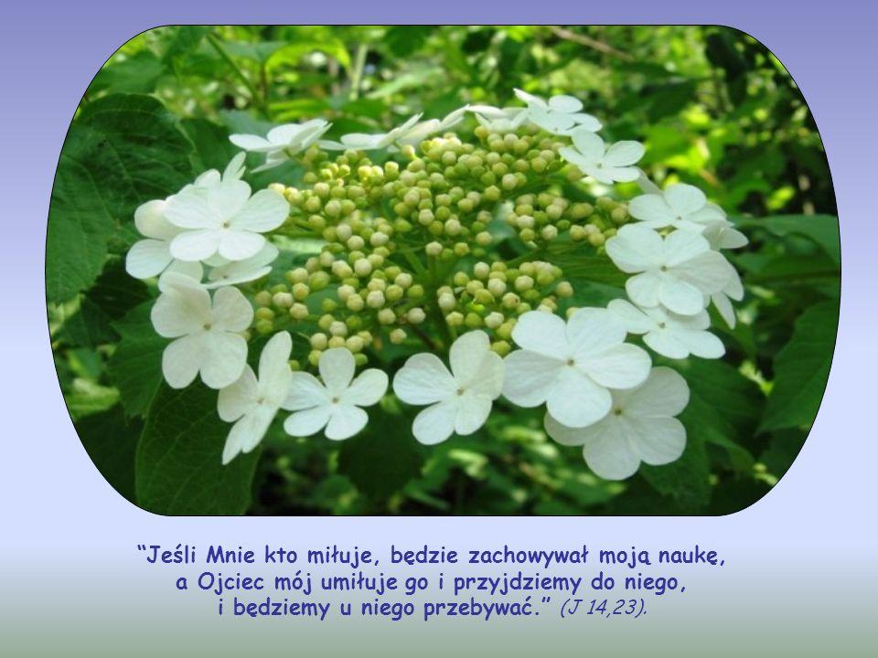 Jeśli Mnie kto miłuje, będzie zachowywał moją naukę, a Ojciec mój umiłuje go i przyjdziemy do niego, i będziemy u niego przebywać. (J 14,23).