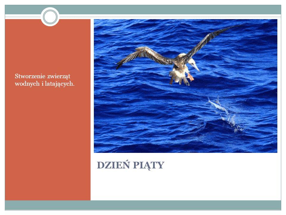 Stworzenie zwierząt wodnych i latających.