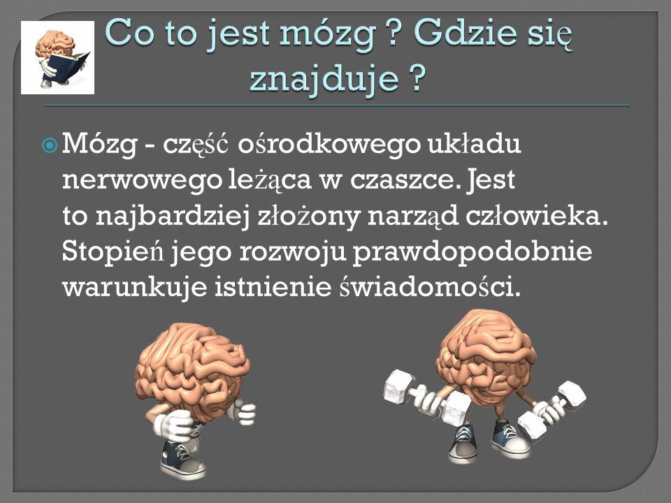 Co to jest mózg Gdzie się znajduje