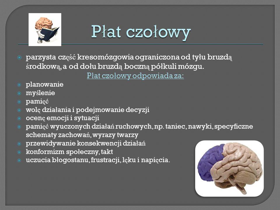 Płat czołowy parzysta część kresomózgowia ograniczona od tyłu bruzdą środkową, a od dołu bruzdą boczną półkuli mózgu.