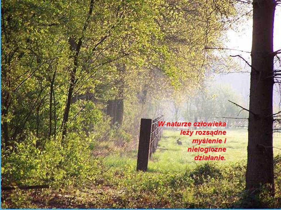 W naturze człowieka leży rozsądne myślenie i nielogiczne działanie.