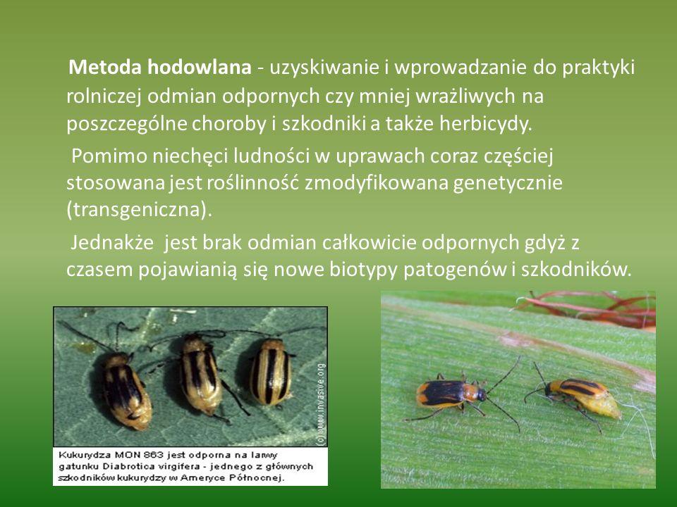 Metoda hodowlana - uzyskiwanie i wprowadzanie do praktyki rolniczej odmian odpornych czy mniej wrażliwych na poszczególne choroby i szkodniki a także herbicydy.
