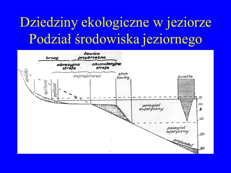 Dziedziny ekologiczne w jeziorze Podział środowiska jeziornego