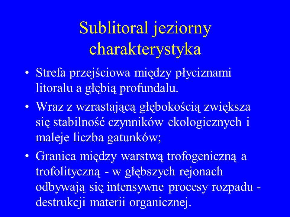 Sublitoral jeziorny charakterystyka