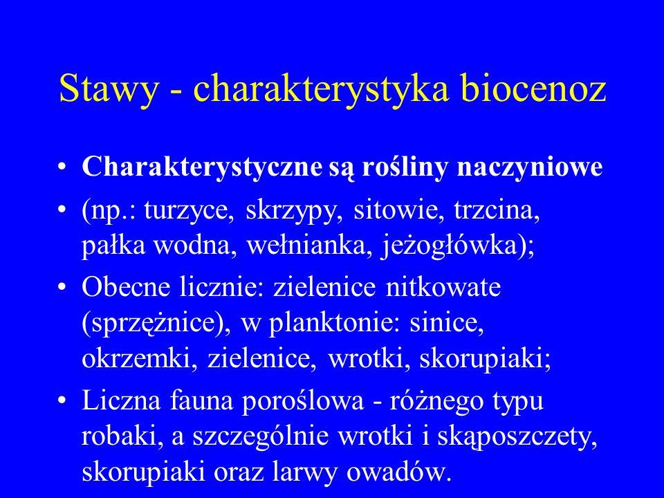 Stawy - charakterystyka biocenoz