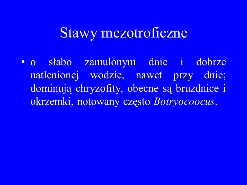 Stawy mezotroficzne