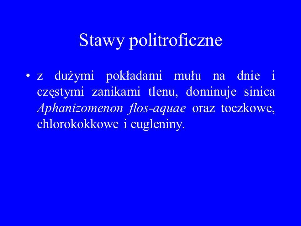 Stawy politroficzne