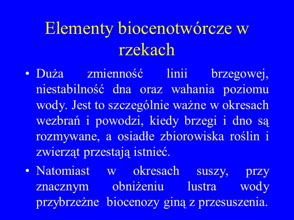 Elementy biocenotwórcze w rzekach