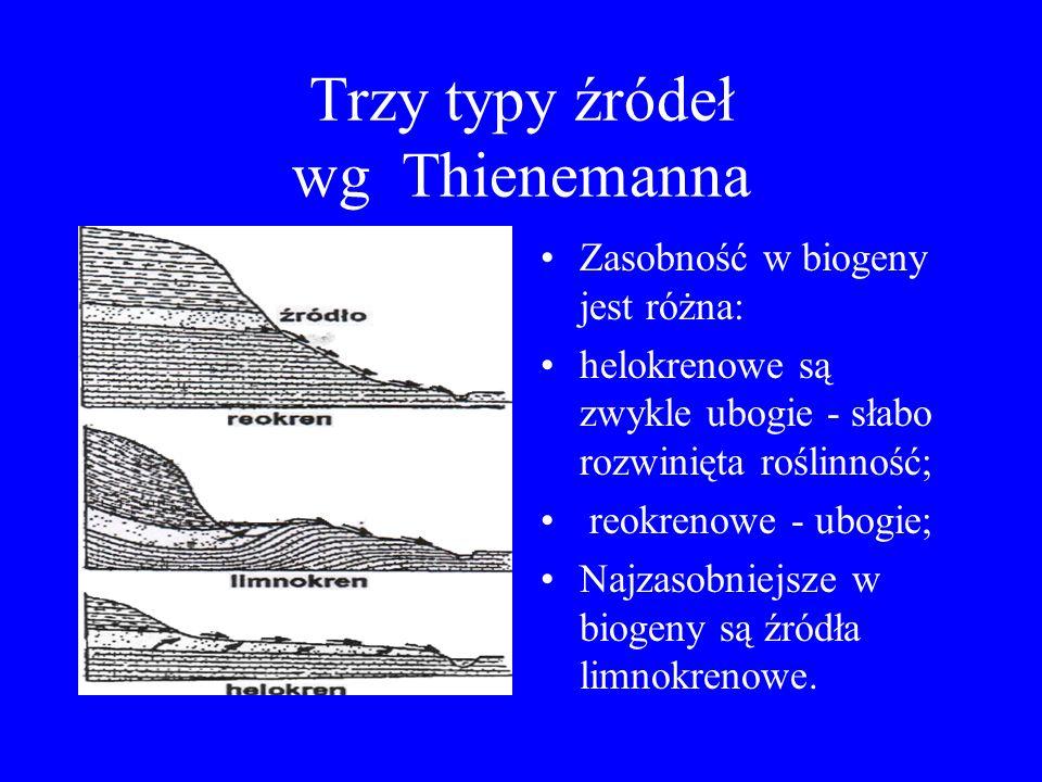 Trzy typy źródeł wg Thienemanna