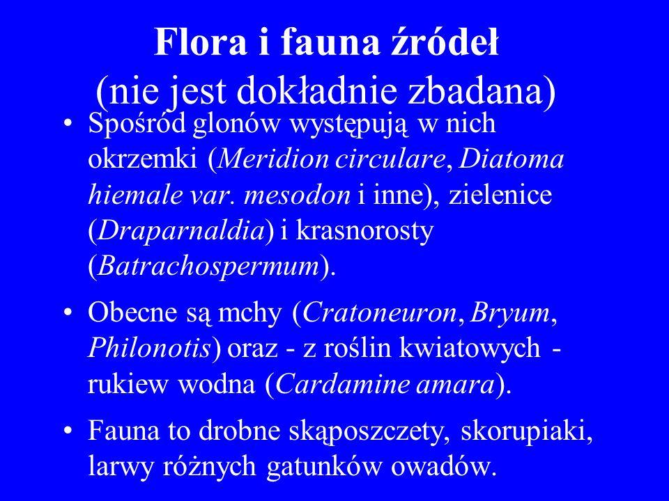 Flora i fauna źródeł (nie jest dokładnie zbadana)