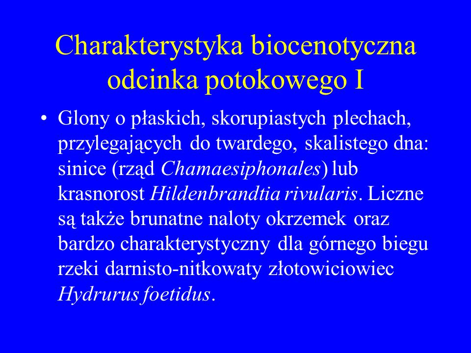 Charakterystyka biocenotyczna odcinka potokowego I