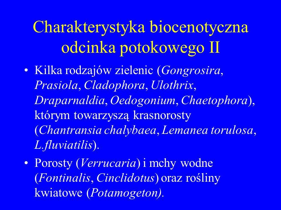 Charakterystyka biocenotyczna odcinka potokowego II