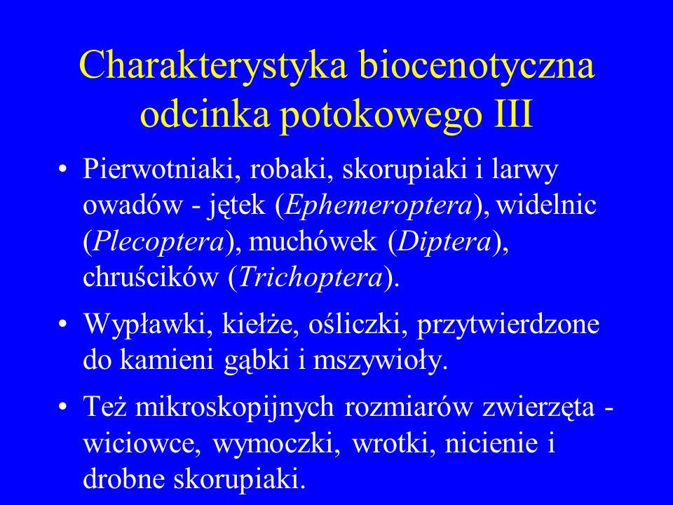 Charakterystyka biocenotyczna odcinka potokowego III