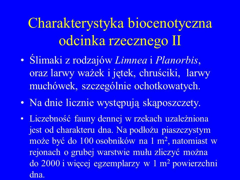 Charakterystyka biocenotyczna odcinka rzecznego II