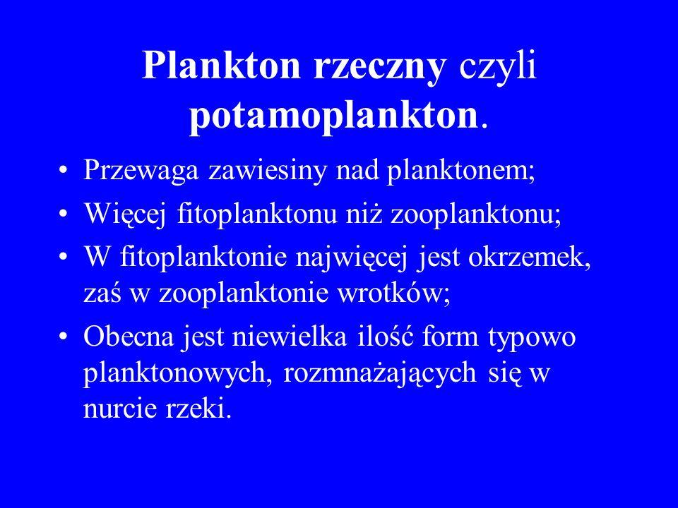 Plankton rzeczny czyli potamoplankton.