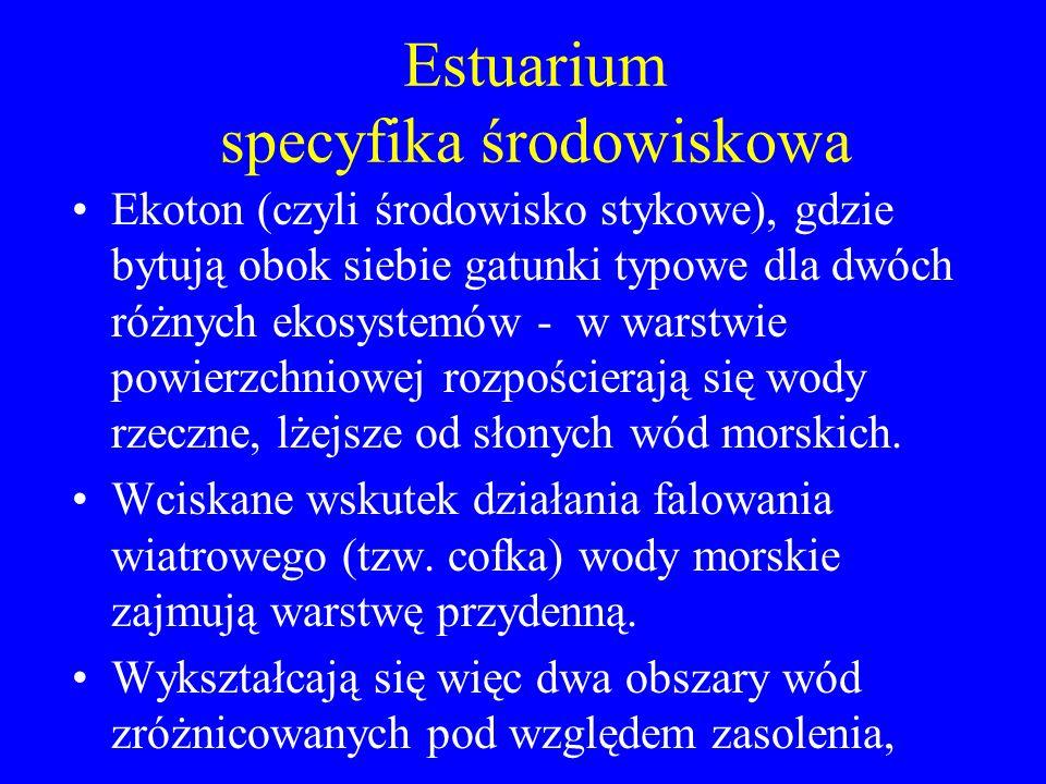 Estuarium specyfika środowiskowa
