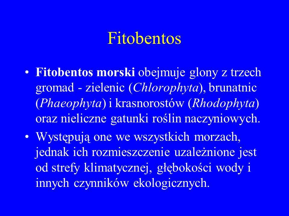 Fitobentos