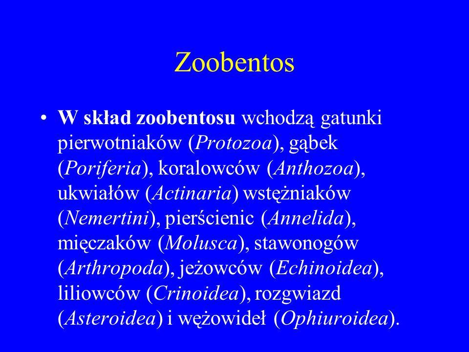 Zoobentos