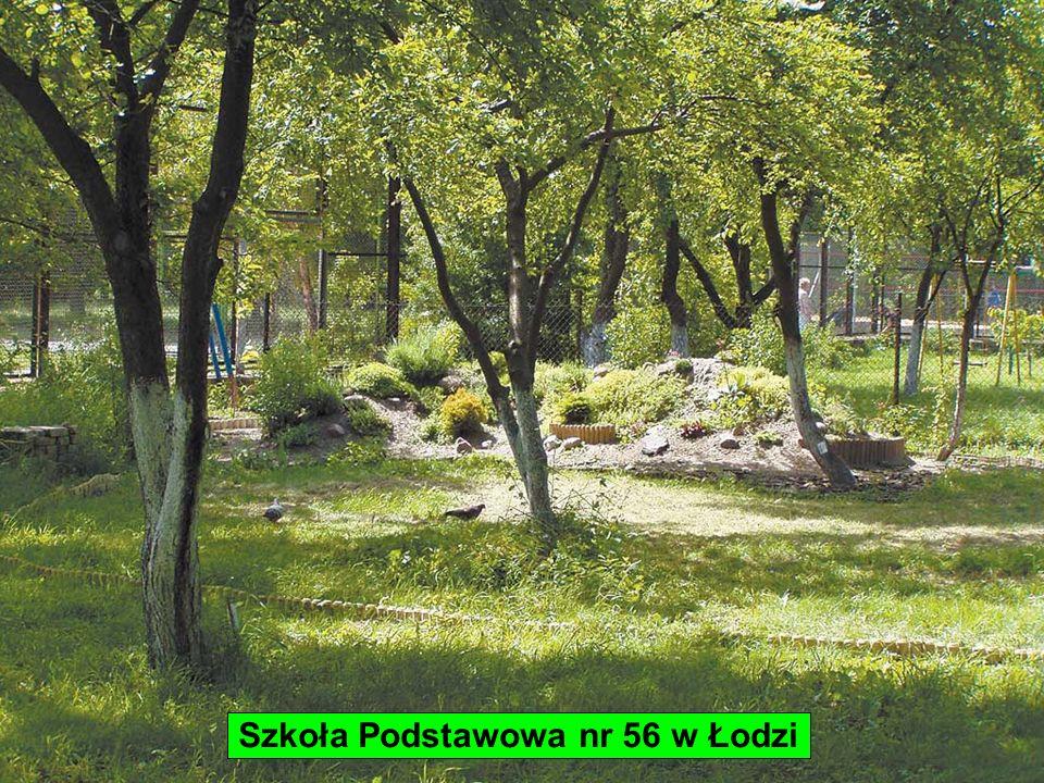Szkoła Podstawowa nr 56 w Łodzi