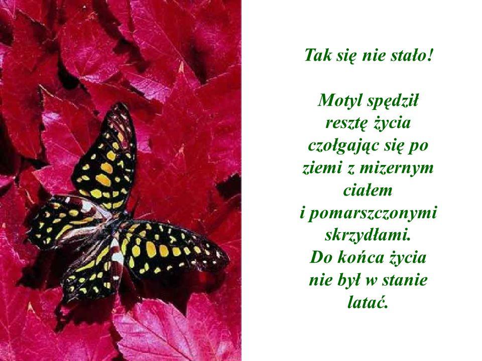Motyl spędził resztę życia czołgając się po ziemi z mizernym ciałem